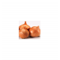 Svogūnų sodinukai 'Red Sun', 0,25 kg