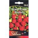 Garden strawberry 'Temtation' 20 seeds