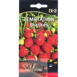 Garden strawberry 'Temtation' 20 seeds