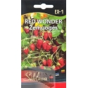 Fragola di bosco 'Red Wonder' 0,2 g