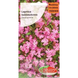 Sweet William catchfly 1 g