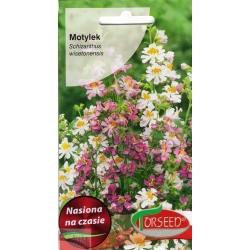 Schizanthus 'Monarch' Mix 1 g