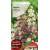 Schizanthus 'Monarch' Mix 1 g