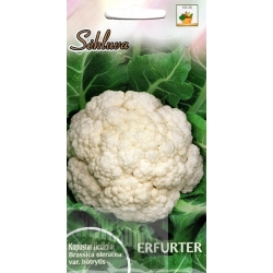 Cauliflower 'Erfurter' 1 g
