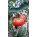 Tomate 'Brutus' 0,2 g