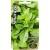 Basilico 'Smaragd' 0,5 g