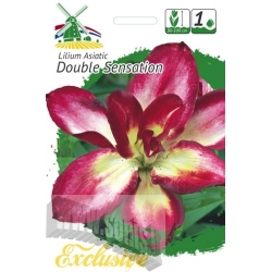 Lilium 'Double Sensation' 1 pcs