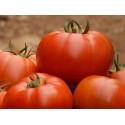 Pomidorai valgomieji 'Belle' H, 250 sėklų