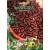 Gartenbohne 'Wawelska' 50 g