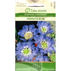 Caucasian pincushion flower 'Perfecta Blue' 2 g