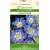 Caucasian pincushion flower 'Perfecta Blue' 2 g