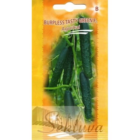Gurke 'Burpless Tasty Green' H, 5 g