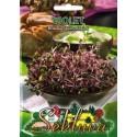 Brokkoli 'Violet' 10 g, für Sprossung
