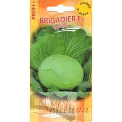 White cabbage 'Brigadier' H, 500 seeds