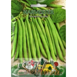 Common bean 'Harvester' 50 g