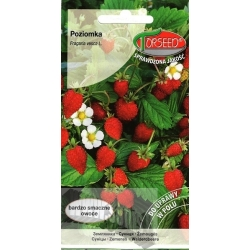 Woodland strawberry 'Baron von Solemacher' 0,2 g