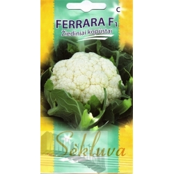Cauliflower 'Ferrara' H, 25 seeds