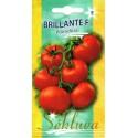Tomate 'Brillante' H, 10 Samen