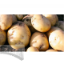 Sėklinės bulvės 'Nandina' 2 kg