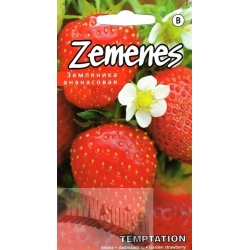 Garden strawberry 'Temptation' 10 seeds