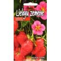 Strawberry 'Ruby Ann' 5 seeds