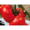 Ēdamais tomāts 'Buran' H, 50 sēklas