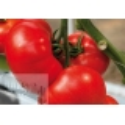 Tomate 'Buran' H, 100 Samen