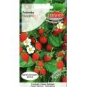 Wald-Erdbeere 'Rujana' 0,2 g