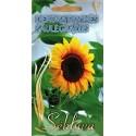 Sunflower 10 g