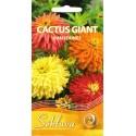 Цинния изящная 'Cactus Giant', смесь, 1 г