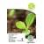 Pomodoro 'Aurea' H, 100 semi