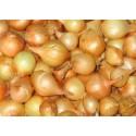 Valgomieji svogūnai 'Stuttgarter Riesen', sėjinukai 15-20 mm