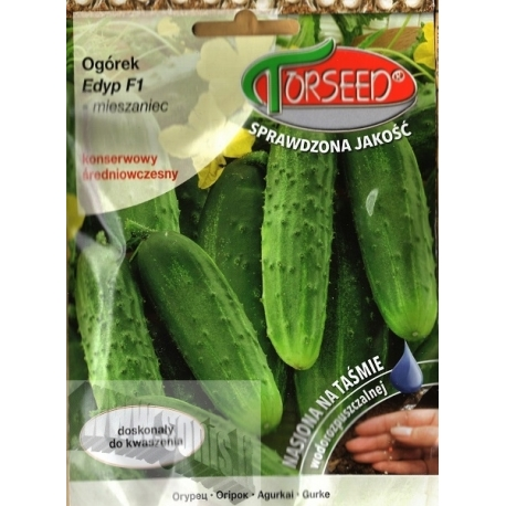 Cucumber 'Edyp' H, 5 m /40 seeds tape