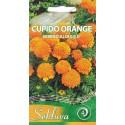 SE Serentis didysis 'Cupido Orange' 0,3 g