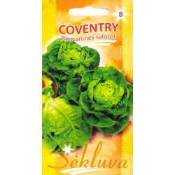 Romaine lettuce 'Coventry' 25 seeds