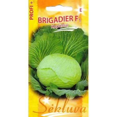 White cabbage 'Brigadier' H, 100 seeds