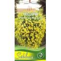 SE Našlaitės 'Yellow', svyrančios 0,2 g