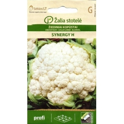 Cauliflower 'Synergy' H, 15 seeds